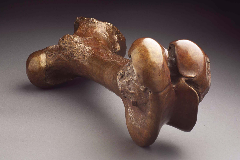 "Leg Bone (Femur), Dimensions: 10"" x 25"" x 11"""